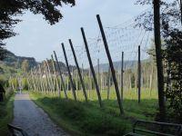 Ferschweiler-Plateau_130