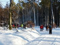 Winterwald_05
