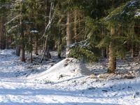 Winterwald_08